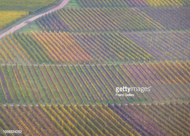 the road through the vineyards, mosel valley, germany - fluss mosel stock-fotos und bilder