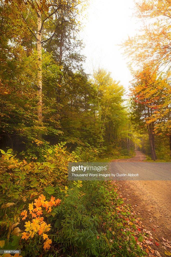 The Road through the Woods : Foto de stock