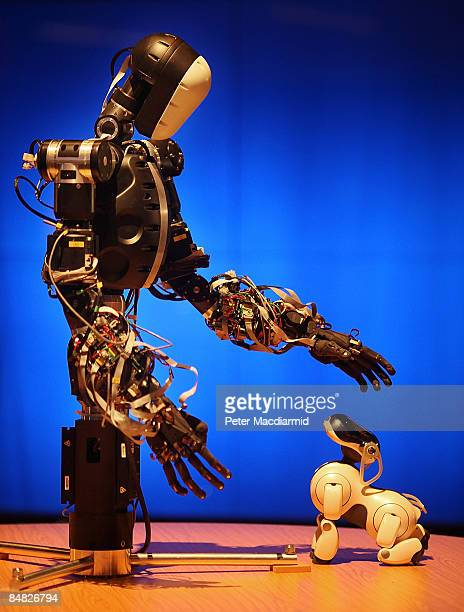 BERTI the robot interacts with a Sony AIBO robot dog at The Science Museum's Antenna Gallery on February 17 2009 in London BERTI is a life size...