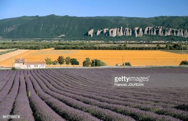 The Rochers des Mées in the background Au loin les rochers des Mées