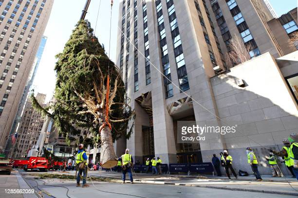 The Rockefeller Center Christmas Tree arrives at Rockefeller Plaza and is craned into place on November 14, 2020 in New York City.
