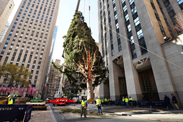 NY: 2020 Christmas Tree Delivered To Rockefeller Center For Holiday Season