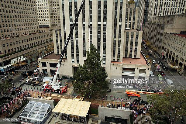 The Rockefeller Center Christmas tree is placed onto its platform on November 6 2015 in New York City The 78foot tall 47foot in diameter 10ton Norway...
