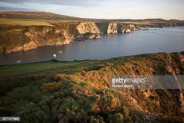 The rocky coastline is at Dinas Head in Pembrokeshire Wales Seen from high up on the cliff top as a late sun plays across the grasses and sandstone...