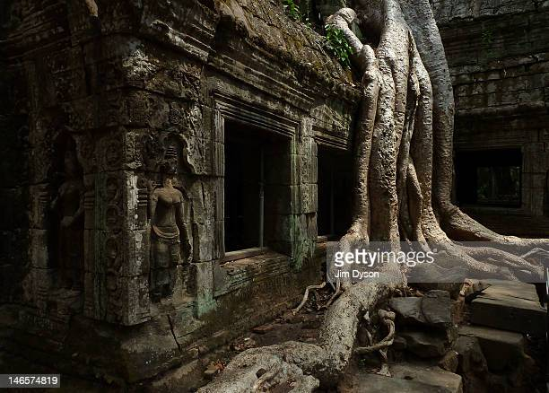 The roots of a tree grow over the ruins of the ancient Khmer temple of Ta Prohm, part of the Angkor Wat temple complex, on March 26, 2012 in Siem...