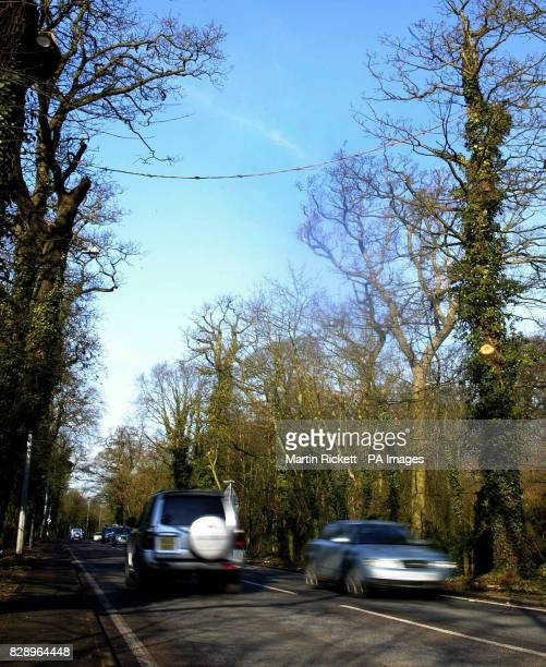 The rope bridge over the A565 at Moor Lane in Ince Blundell near Formby Merseyside that has been put in place to help red squirrel's cross the road...
