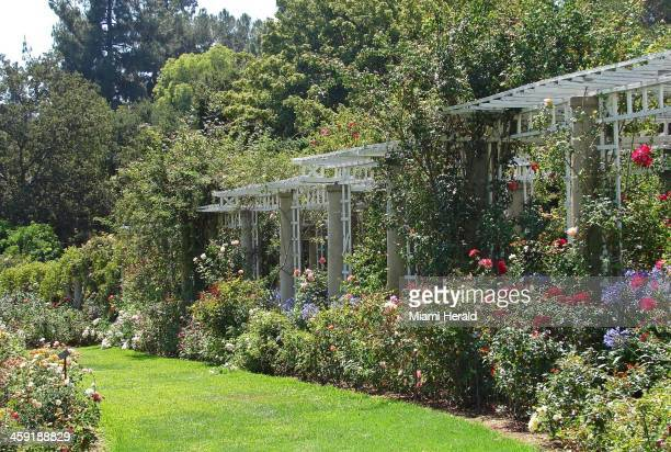 The Rose Garden at the Huntington was originally created in 1908