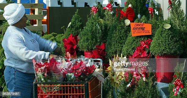 Rosemary Christmas Tree Home Depot.53 Christmas Trees Home Depot Pictures Photos Images Getty Images