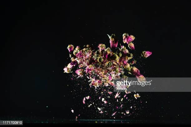 the roses flower dancing in slow motion with black  background - slow motion stock pictures, royalty-free photos & images