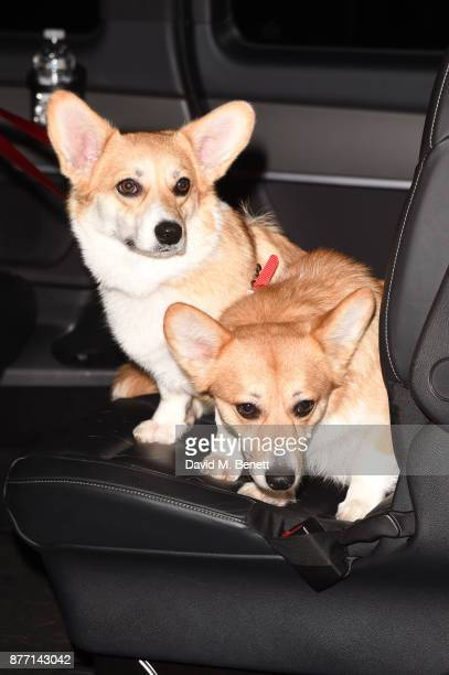 The Royal Corgis attend the World Premiere of season 2 of Netflix 'The Crown' at Odeon Leicester Square on November 21 2017 in London England