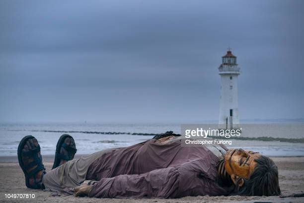 The Royal De Luxe theatre company's shipwrecked giant one of the street marionettes taking part in Liverpool's Dream' sleeps on the beach near Perch...