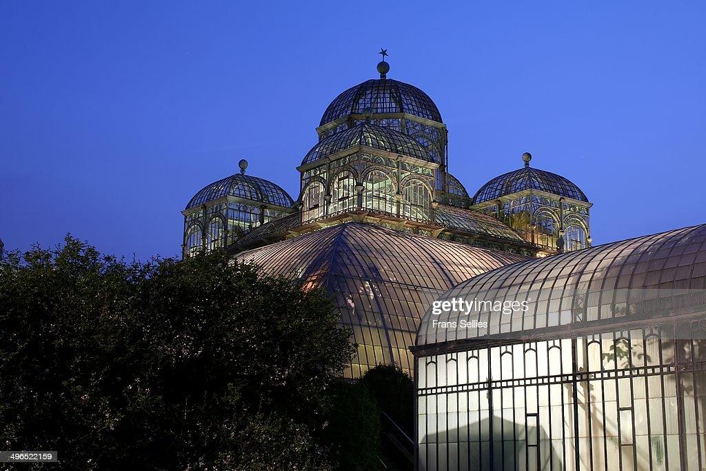 Congoserre at the Royal Greenhouses : Nieuwsfoto's