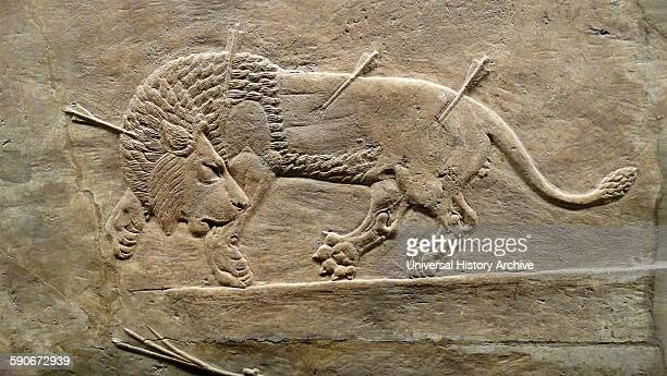 The royal lion hunt Assyrian about 645635 BC From Nineveh North Palace Iraq Lions are released from cages into the arena one by one and men on horses...