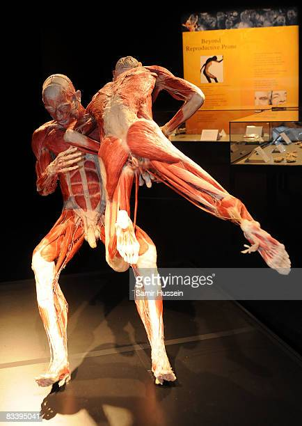 The Rugby Gladiators exhibitis displayed at Gunther von Hagens' 'Body Worlds And The Mirror Of Time' exhibition at the O2 bubble on October 23 2008...