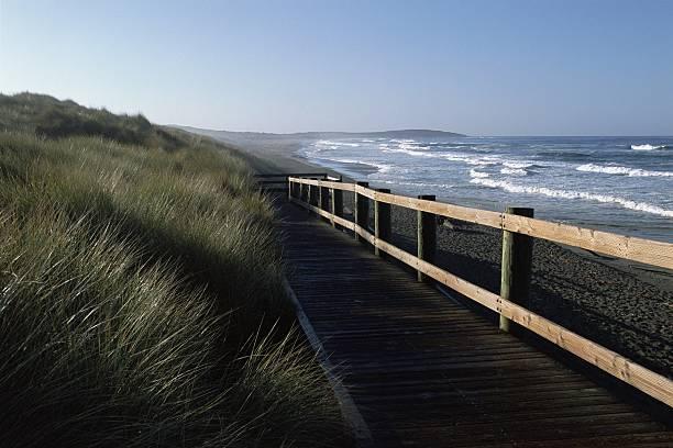 California's Rugged Coastline Near Bodega Bay