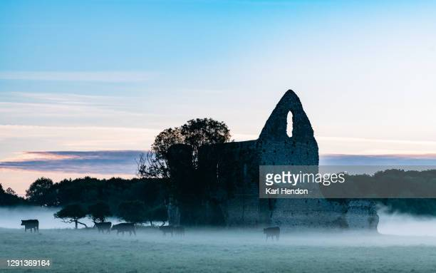 the ruins of newark abbey at dawn, surrey - stock photo - british royalty stock pictures, royalty-free photos & images