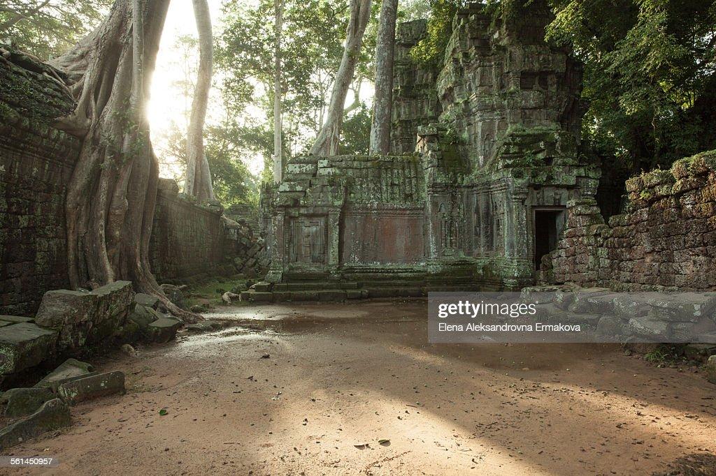 The ruins of Ta Prom Temple, Cambodia : Stock Photo
