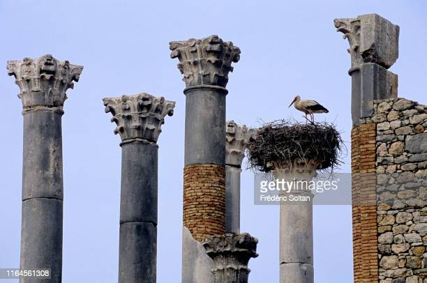The ruins of the Roman town of Volubilis in Meknes on June 20, 2019 in Volubilis, Morocco.