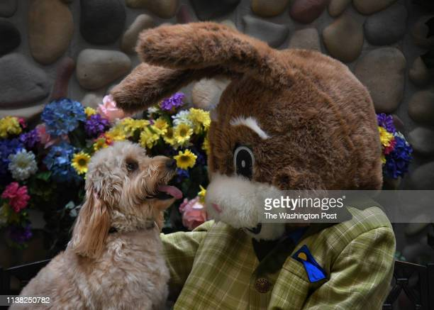 The Runnerstrom family and dog pose with the Easter Bunny at Fair Oaks Mall on 4/13/19 They include mom Molly Runnerstrom with dog Bailey dad Davin...