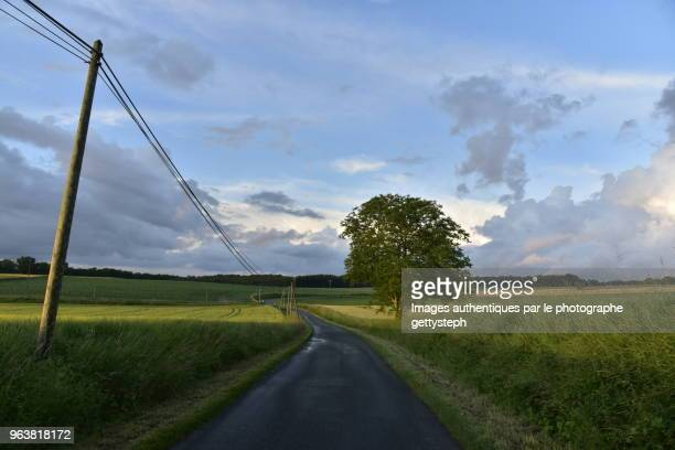 The rural road in middle cultivate fields under evening light