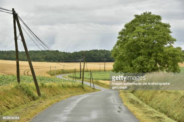 the rural road with isolated trees in along ,through cultivated lands and meadows under light rain - moat stock pictures, royalty-free photos & images