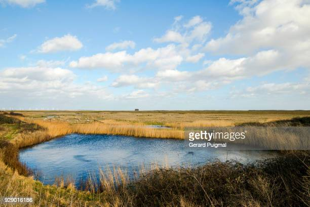 the rye harbour nature reserve in rye (east sussex, england, united kingdom) - rye stock photos and pictures