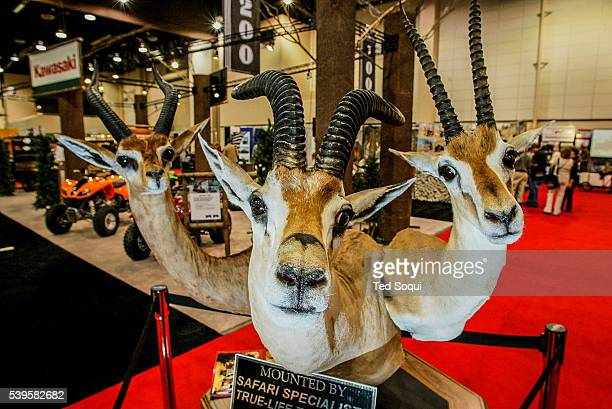 The Safari Hunters Club convention 2004 held in Reno Nevada The annual event features the latest in hunting including guns guides taxidermy and...