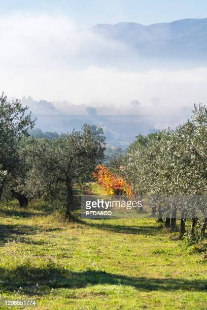 The Sagrantino Wine Route. Autumn vineyards of the Montefalco countryside. Umbria. Italy. Europe.