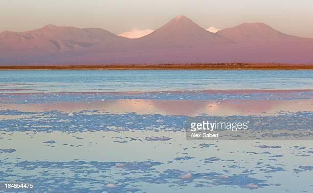 the salar de atacama in the atacama desert, chile. - alex saberi stock-fotos und bilder
