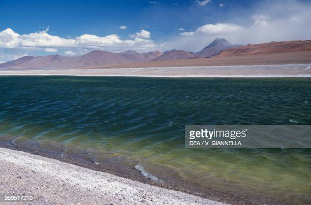 The Salar de Pujsa Natural Reserve in the background the Cerro Pili or Acamarachi Chile