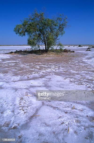 the salty reaches of lake dora in the great sandy desert, western australia, australia. - great sandy desert fotografías e imágenes de stock