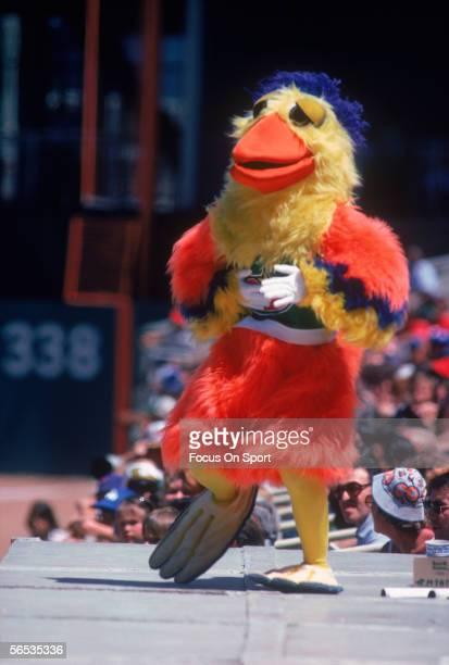 The San Diego Chicken makes an appearance at the Veterans Stadium during a game against the Philadelphia Phillies circa 1979 in Philadelphia...