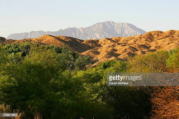 The San Jacinto Mountains are seen in the distance behind new green growth at a honey mesquite grove as recovery from a 2005 wildfire continues at...