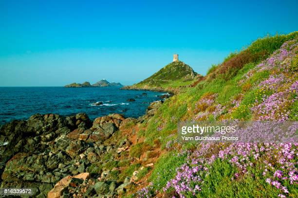 the sanguinaires archipelago, corsica, france - corsica stock-fotos und bilder