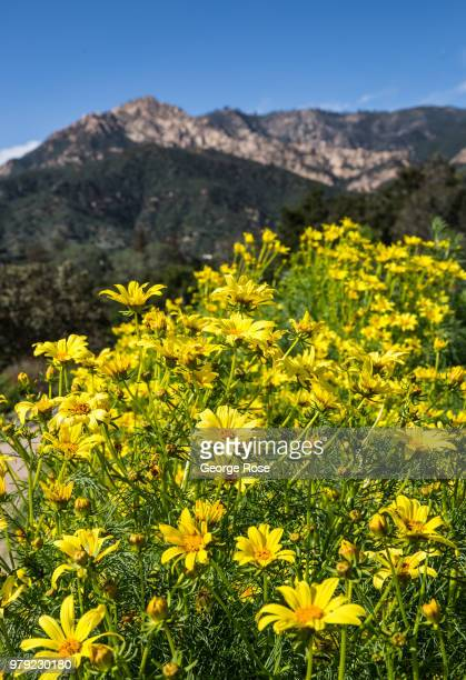 Santa Barbara Botanic Garden Stock Photos and Pictures | Getty Images