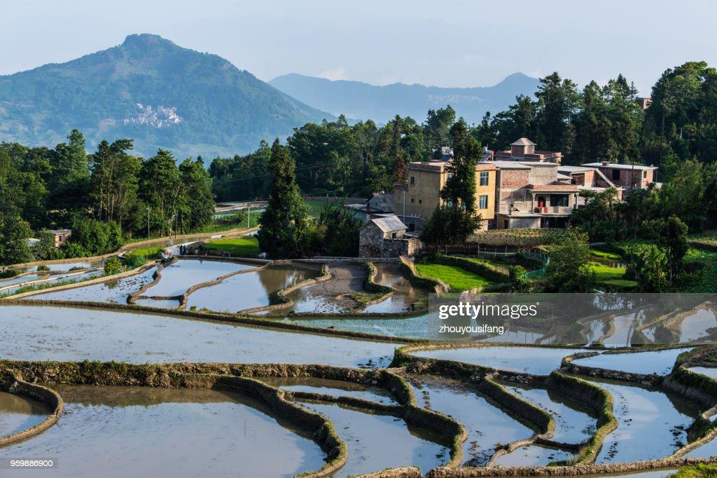 The scenery of terraced fields : Stock-Foto