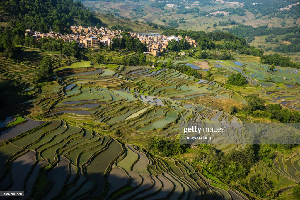 The scenery of the terraced fields : Stock Photo