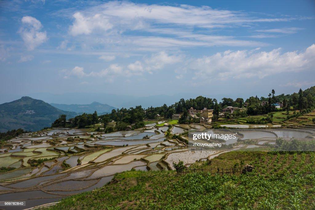 The scenery of the terraced fields : Stock-Foto