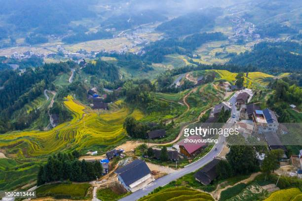 the scenery of the ziquejie terraced field - hunan province stock pictures, royalty-free photos & images