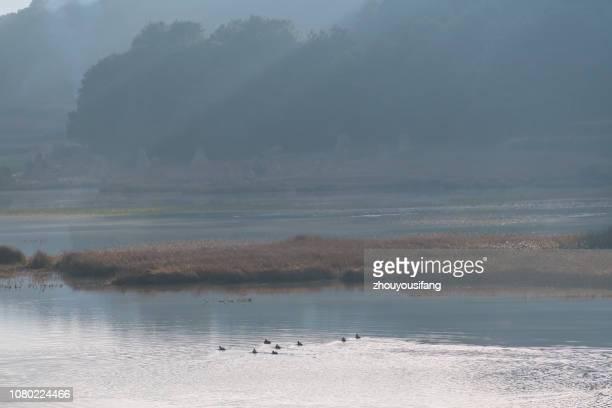 the scenery of wetland - feuchtgebiet stock-fotos und bilder