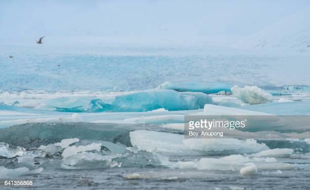 The scenery view of Ice floating in Jokulsarlon (Jökulsárlón) glacier lagoon of Iceland.