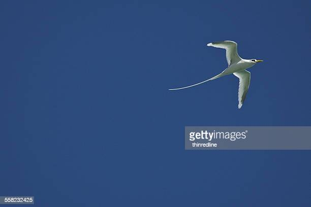 The seagull in the blue sky