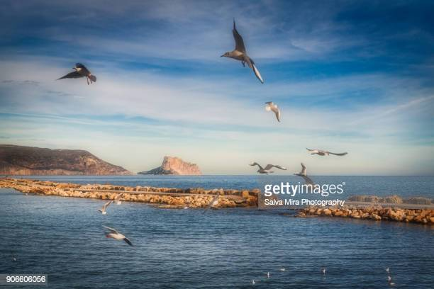 the seagulls and the rock - altea stock photos and pictures