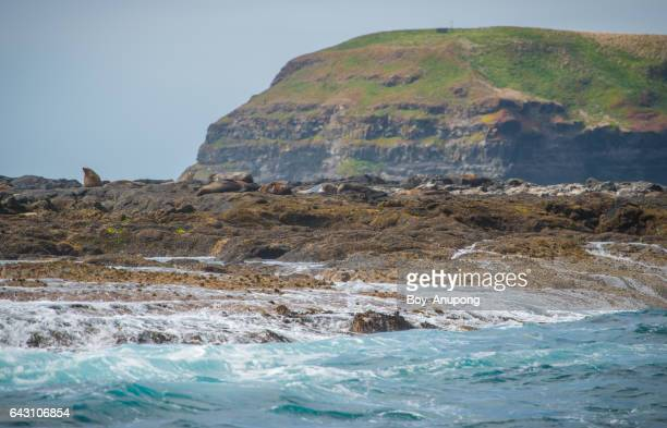 The Seal rocks the largest Fur Seal colony in Australia with the Nobbies rock in behind.
