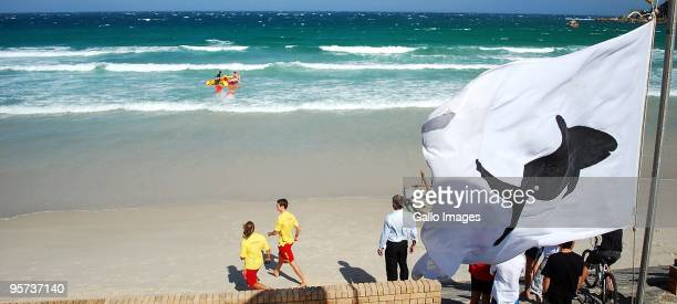 The search continues for the body of an unknown foreign man who was torn apart by a Great White shark after taking a swim in the shallow waters at...
