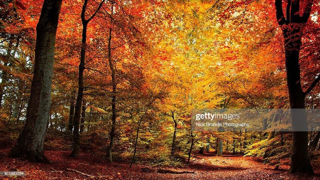 The Season Of Colour : Stock Photo