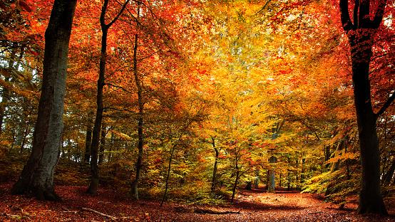 The Season Of Colour - gettyimageskorea