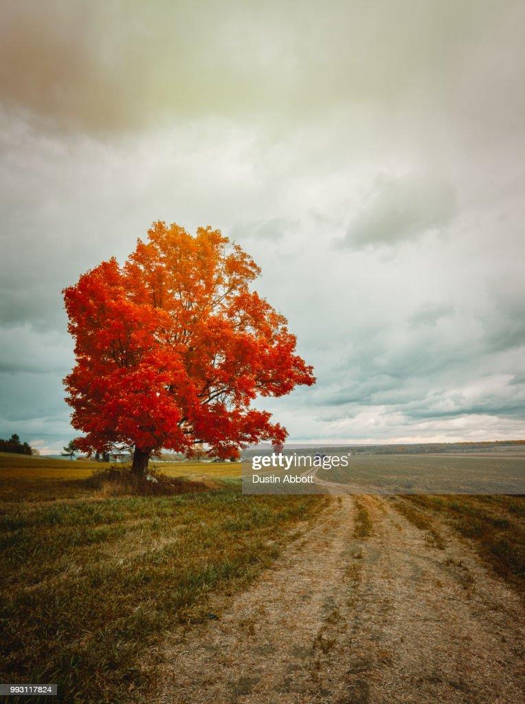 The Seasons of Life : Stock Photo