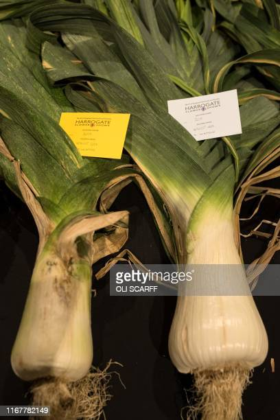 The second prize and fourth prize leeks entered into the heaviest leek competition are pictured on the first day of the Harrogate Autumn Flower Show...