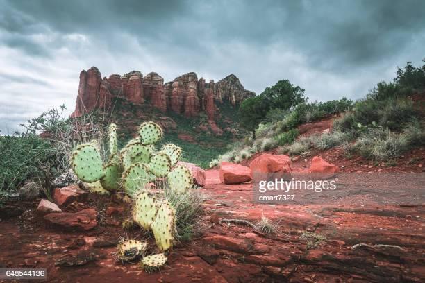 the sedona desert - rocha vermelha imagens e fotografias de stock